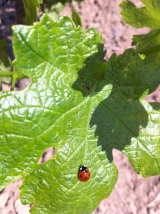 <h5>Oh Jolie coccinnelle...</h5>