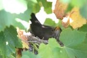 <h5>De la visite dans les vignes...</h5>