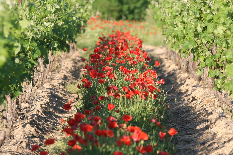 agriculture-biologique-sainte-marie-des-crozes