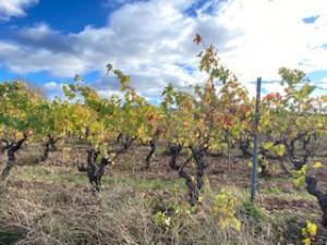 photo vigne automne 16
