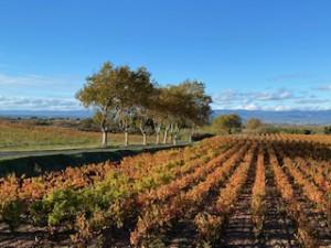 photo vigne automne 26